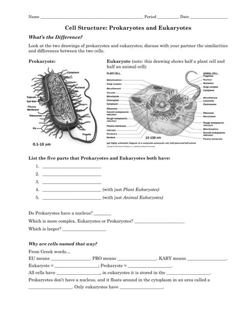 Cell Structure  Prokaryotes And Eukaryotes Worksheet