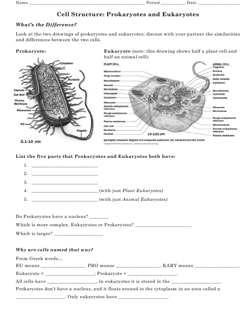 Cell Structure Prokaryotes And Eukaryotes Worksheet Randolph High