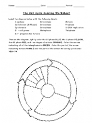 The Cell Cycle Coloring Worksheet - Bio 104 Foundations In Biology Ii, Matthew Hamilton, Georgetown University