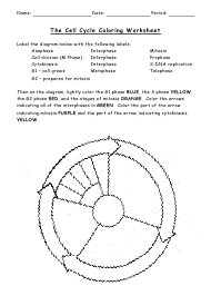 """The Cell Cycle Coloring Worksheet - Bio 104 Foundations in Biology Ii, Matthew Hamilton, Georgetown University"""