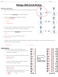 """Biology (Dna) Worksheet With Answer Key - Cobb County School District"""