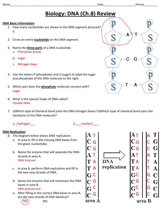 Biology Dna Worksheet With Answer Key Cobb County School