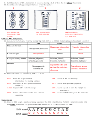 Bio Dna Unit Review Worksheet   fadeintofantasy further 20 Elegant Dna the Double Helix Coloring Worksheet   Valentines Day furthermore  as well Bio Dna Unit Review Worksheet   fadeintofantasy as well Biology Dna Worksheet The best worksheets image collection together with DNA Profiling Activity   HHMI BioInteractive moreover Biology  Dna  Worksheet With Answer Key   Cobb County besides  together with Bio Dna Unit Review Worksheet   fadeintofantasy likewise Bio Dna Unit Review Worksheet   fadeintofantasy furthermore Chapter12 packet as well Dna Review Worksheet And Structure Replication Section Answers With moreover  as well Bio Dna Unit Review Worksheet   fadeintofantasy also DNA Crossword additionally Biology Worksheets Dna   Elmifermetures. on bio dna unit review worksheet