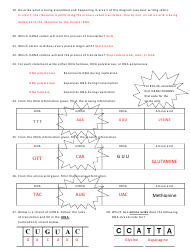Biology (Dna) Worksheet With Answer Key - Cobb County ...
