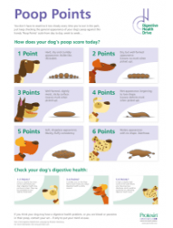 Dog Poop Examination Chart - Digestive Health Drive