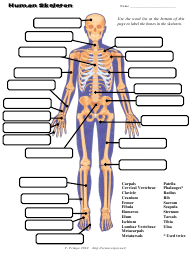 Human Skeleton Chart Template - the Science Spot, T. Trimpe 2010