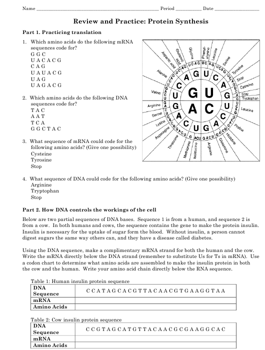 Review And Practice Protein Synthesis Worksheet Grade 12th Westgate Mennonite Collegiate Download Printable Pdf Templateroller